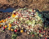 Мэр Блумберг объявил о программе общегородского компостирования в Нью-Йорке