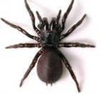 Через сто лет исследований ученые дали точный ответ на вопрос, почему мухи прилипают к паутине, а пауки нет