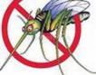 Найдено объяснение феномену комариных полетов в дождь