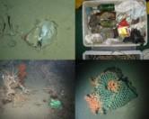 Нет ни одной области в Мировом океане, свободной от мусора: новое исследование