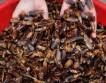 Китайцы активно разводят тараканов на фермах