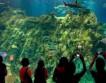 Лучшие «зелёные» парки развлечений