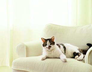 Как удалить жирные пятна, оставленные домашним животным, лежавшим на ковре?