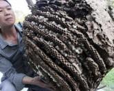 В Китае для борьбы с насекомыми используют огнемет