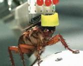Тараканов научили искать под завалами людей.