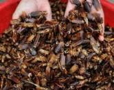Все более прибыльными в Китае становятся тараканьи фермы.