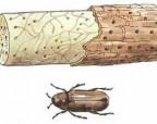 Обезопасьте мебель от жука-точильщика