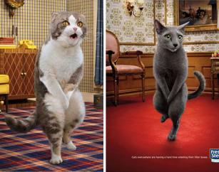 Смешная реклама кошачьего туалета