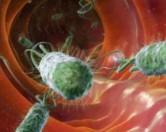 Какие бактерии влияют на поведение человека.
