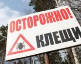 Жителей Подмосковья атаковали клещи, несущие боррелиоз
