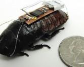 Радиоуправляемые тараканы на службе у человека