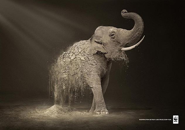 Дикая природа превращается в прах